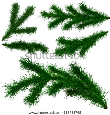 set of Christmas tree fir branches on white background - stock photo