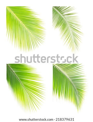 Set of coconut leaves isolated on white background - stock photo