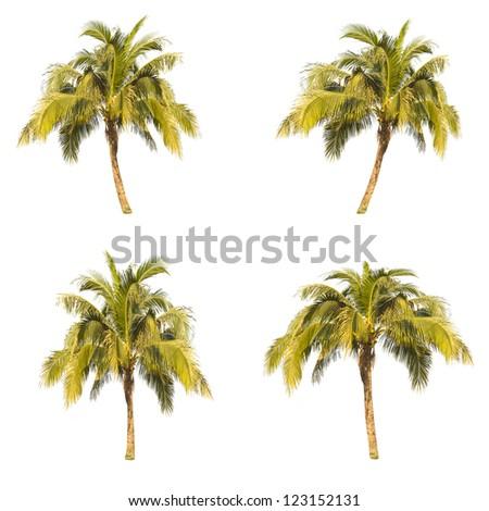 Set of coconut plam  tree isolated on white background - stock photo