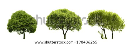 Set of Colored Silhouette Tree  Isolated on White Backgorund. Vecrtor Illustration. - stock photo