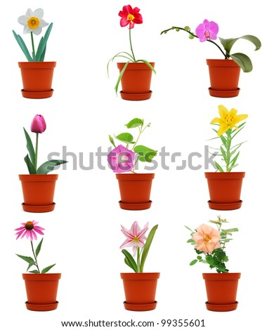 set of colorful flowers in pots
