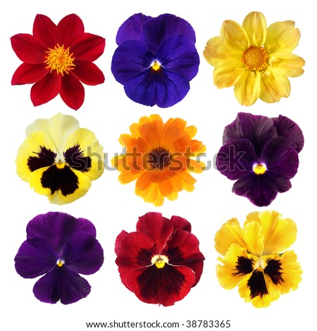 set of colorful flowers on white background - stock photo