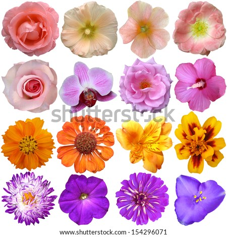 Set of colorful seasonal blooms  - stock photo