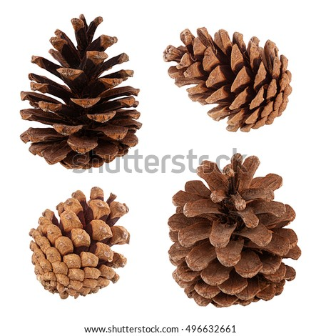 Set of cones of coniferous trees isolated on white