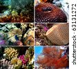 Set of 6 corals images. Underwater concept - stock photo