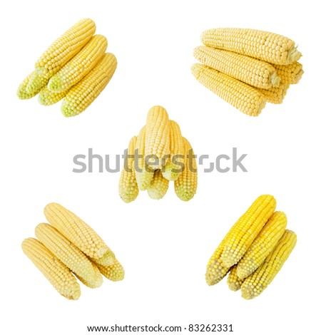 set of corn isolated on the white background - stock photo