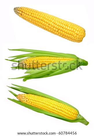 Set of corn isolated on white background - stock photo