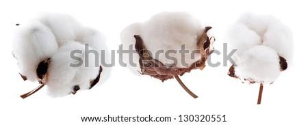 Set of cotton plants on white - stock photo
