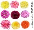 Set of dahlia flower heads isolated on white - stock photo