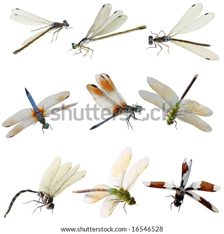 Set of damselfly and dragonfly isolated on white - stock photo