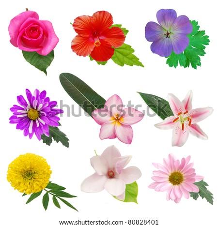 Set of decorative blooms - stock photo