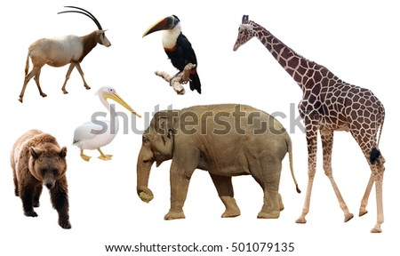 Set of different animals on white background