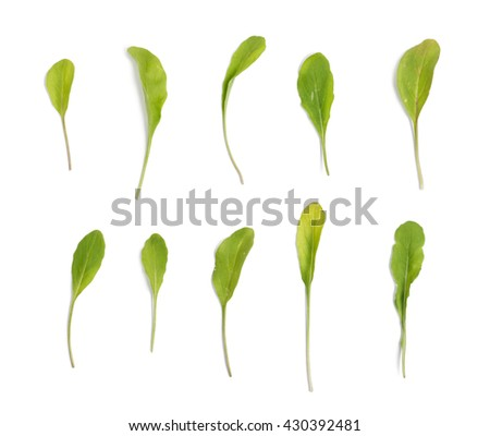 Set of different arugula leaves on white background with shadow. Torn and clean leaves in one set. - stock photo