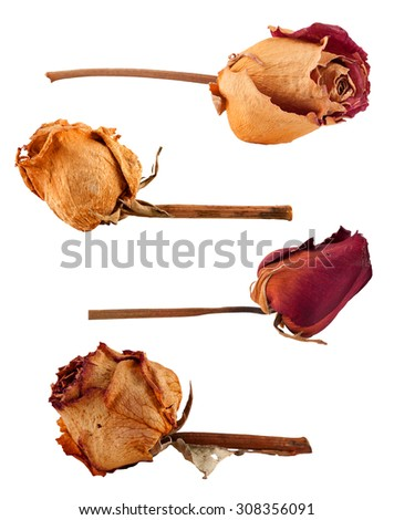 Set of different dried roses isolated on white - stock photo