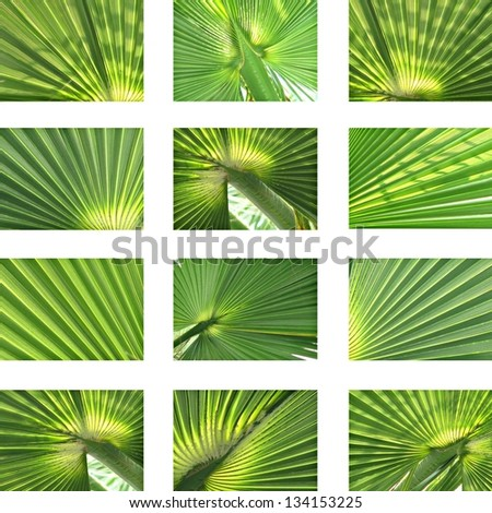 Set of different palm and coconut leaves focused - stock photo