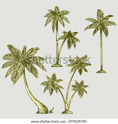 Set of different palm trees. Raster version - stock photo