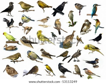 Set of 35 (different) photographs of birds isolated on white - stock photo