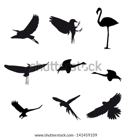 Set of different photographs of birds isolated on white background - stock photo