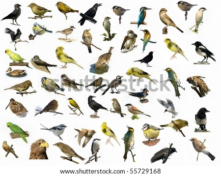 Set of 54 different photographs of birds isolated on white background - stock photo