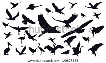 Set of different photographs of birds isolated on white background. Raster version.