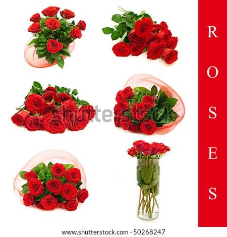 set of different roses images over white background - stock photo