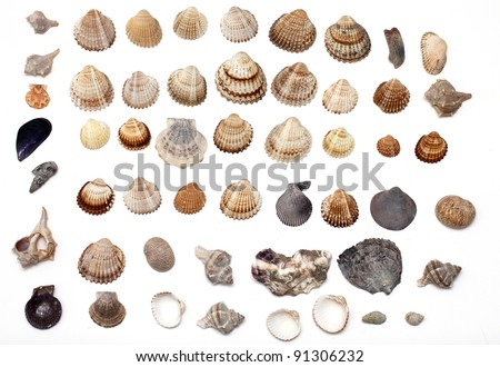 set of different sea shells on white background - stock photo