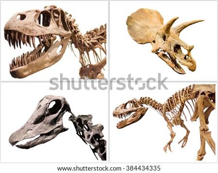 Set of dinosaurs skeleton T-Rex, Diplodocus, Triceratops, on white isolated background - stock photo