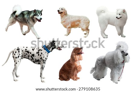 Set of dogs. Isolated over white background