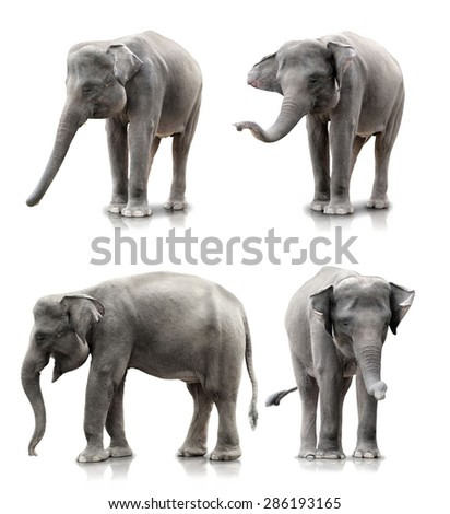 set of elephant isolated over white background - stock photo