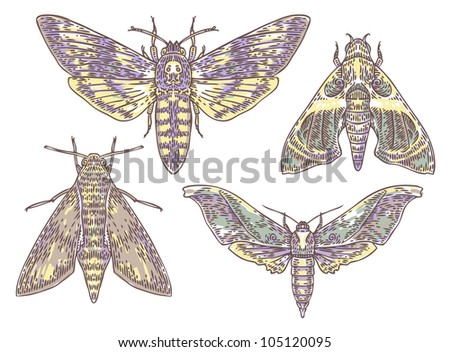 set of engraved moths - stock photo