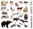 Set of european animals. Isolated over white background  - stock photo
