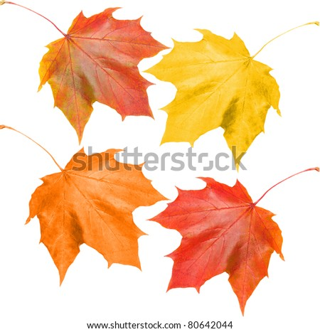 set of fall leaves on white background - stock photo