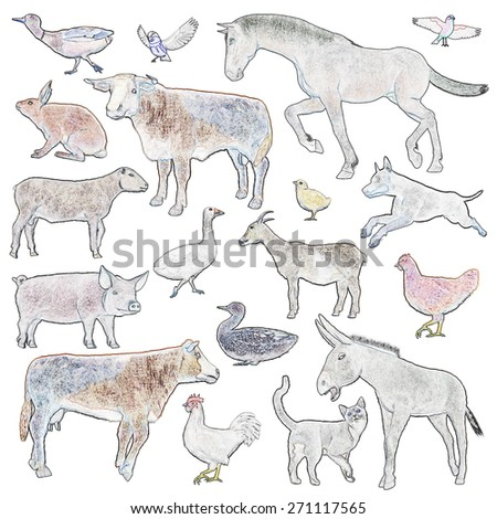 Set of farm animals isolated in white background - stock photo