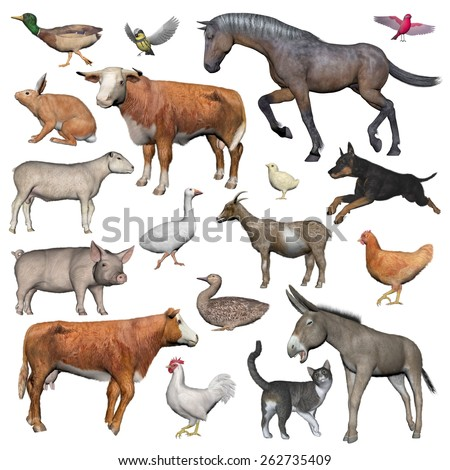 Set of farm animals isolated in white background - 3D render - stock photo
