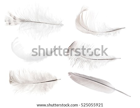 set of feathers isolated on white background