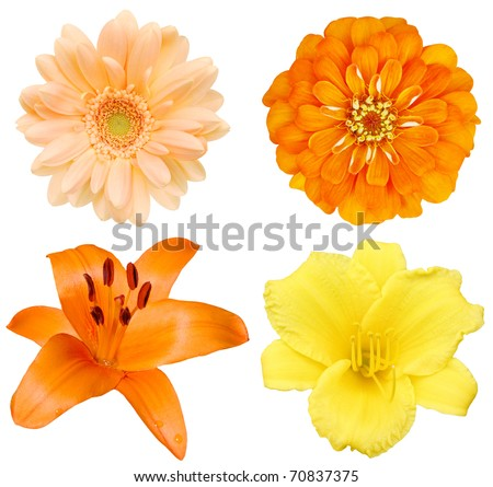 Set of festive spring blooms - stock photo