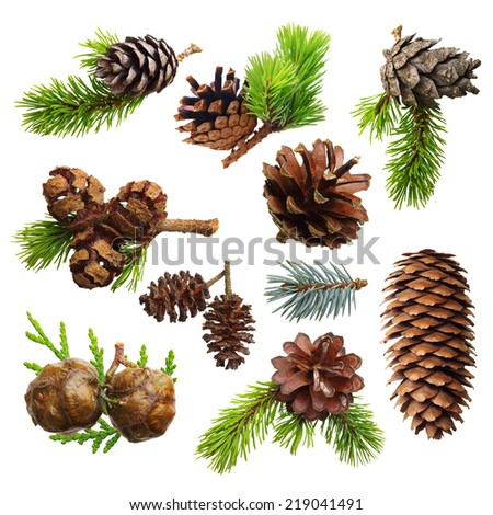Set of fir evergreen tree branches and cones isolated on white. Christmas decoration. - stock photo