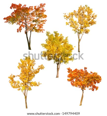 set of five autumn trees isolated on white background - stock photo
