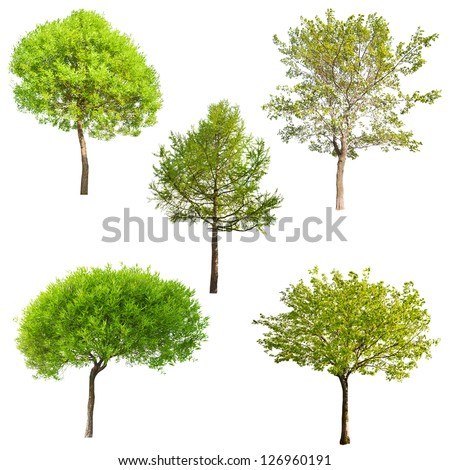 set of five green trees isolated on white background - stock photo