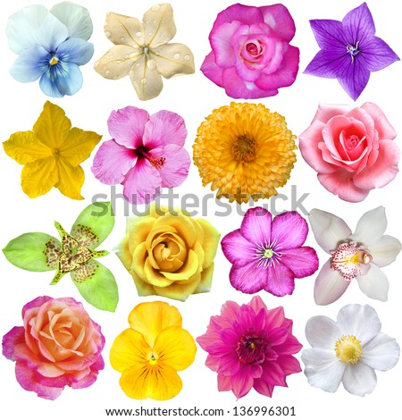 set of Flower heads isolated on white - stock photo