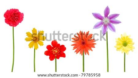 Set of flowering blooms - stock photo