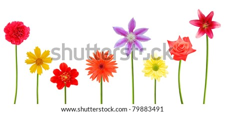 set of flowering blooms on summertime - stock photo