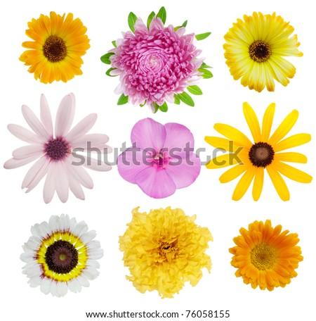 Set of flowers - stock photo