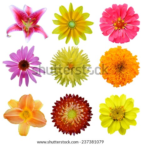 Set of flowers in different assorted, America blooming