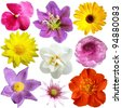 Set of flowers in different shapes and  color - stock photo