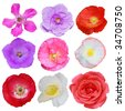 Set of flowers isolated on white background - stock photo