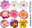 Set of flowers. Isolated on white background. - stock vector