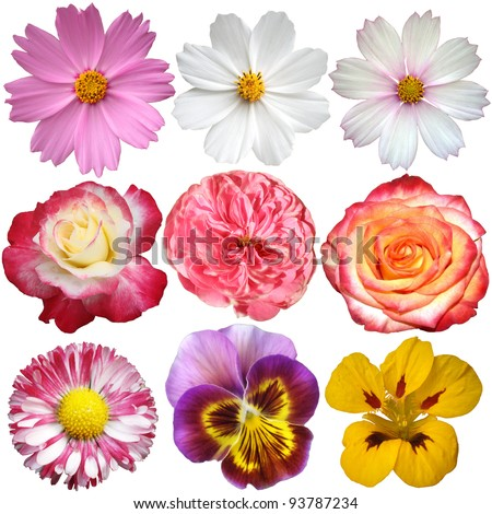 Set of flowers. Isolated on white background.