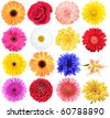 Set of flowers. Isolated on white background. Close-up. Studio photography. - stock photo