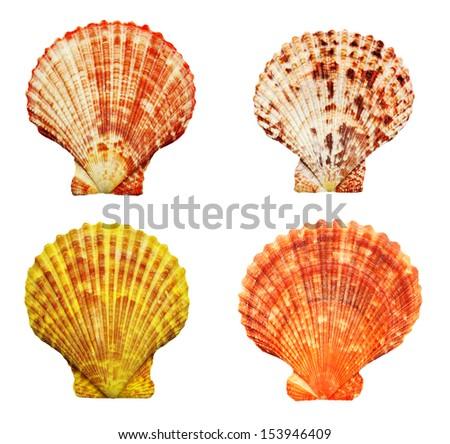Set of four beautiful colorful seashells, isolated on white background - stock photo